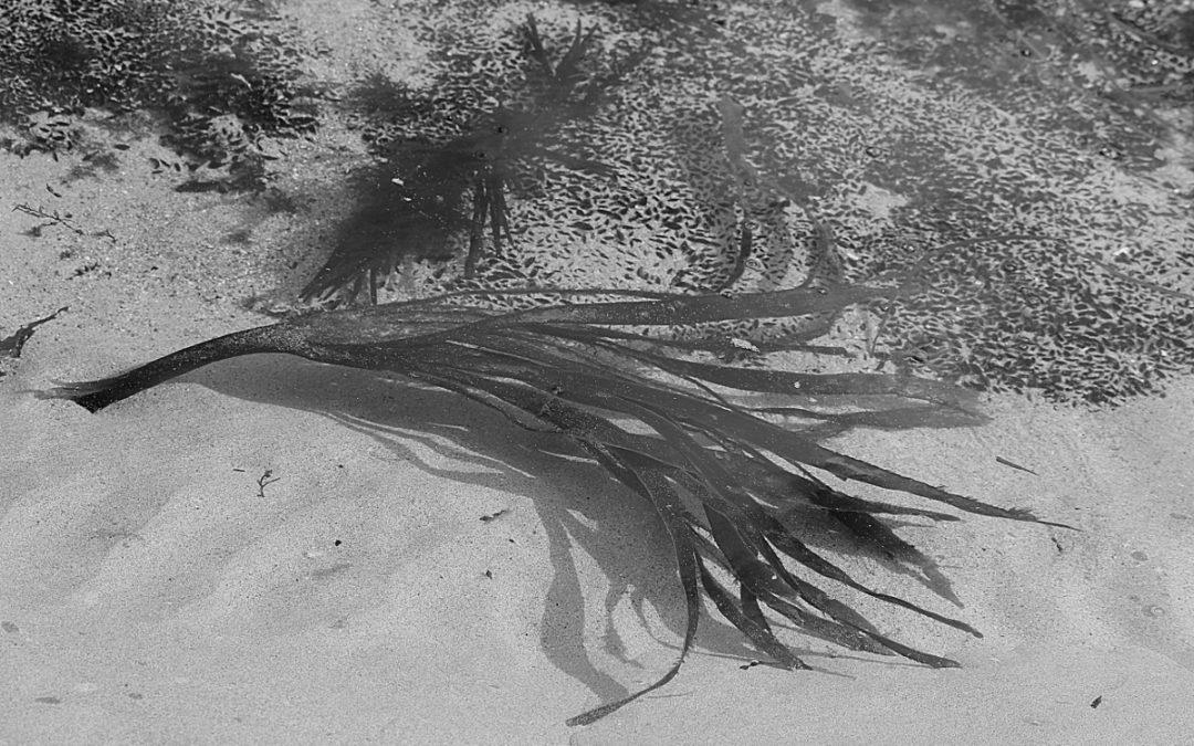 L'océan en noir & blanc, en détails et sans mot… car je n'en ai pas…