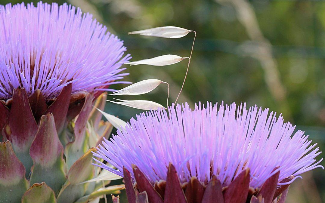 L'abeille et la guêpe…