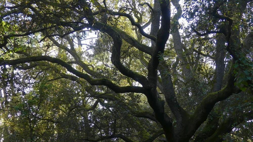 Aux arbres et cætera …