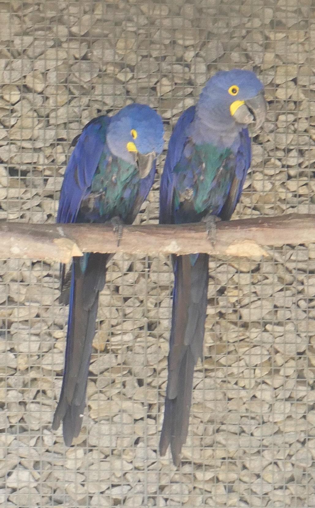 Oiseaux commères