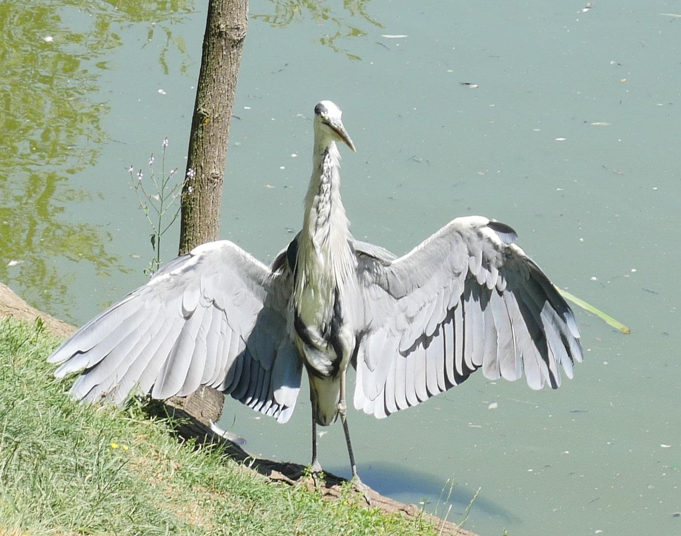 Oiseau exhibitionniste