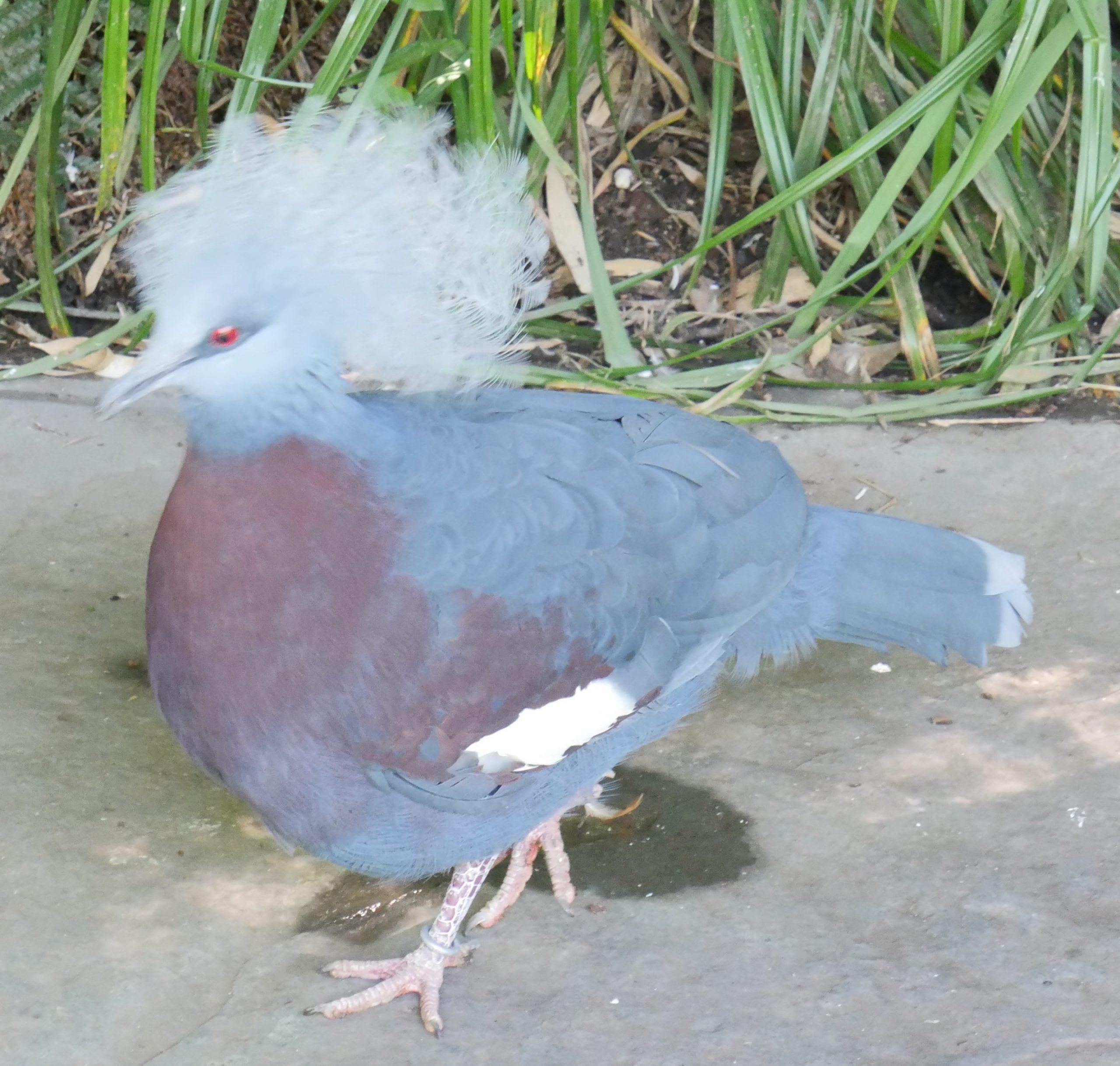 Oiseau mégère