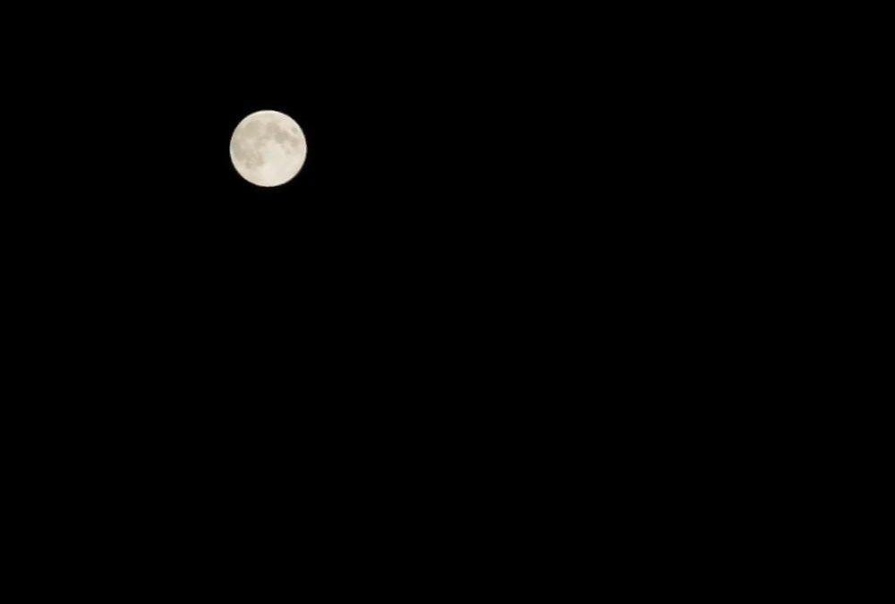 Nuit fauve